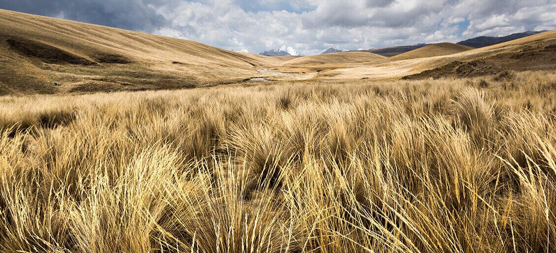 Paja de fibra vegetal altiplanos andinos puente Queshuachaca