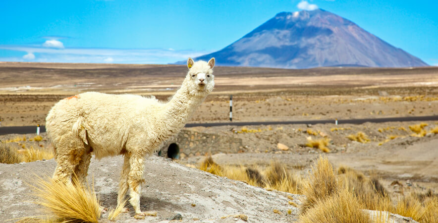 Camelid caves of Sumbay Misti Arequipa volcano