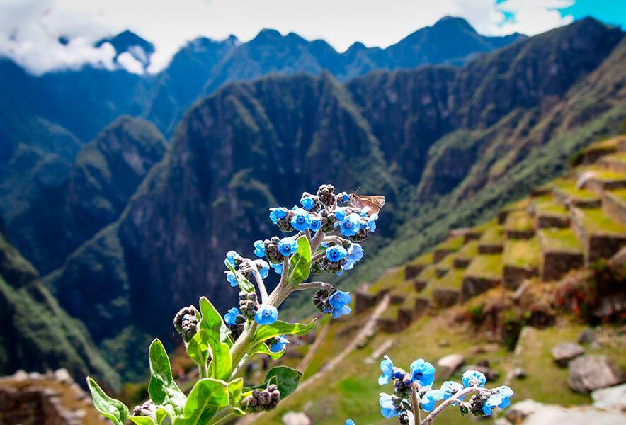 Biodiversidad ciudadela de Machu Picchu