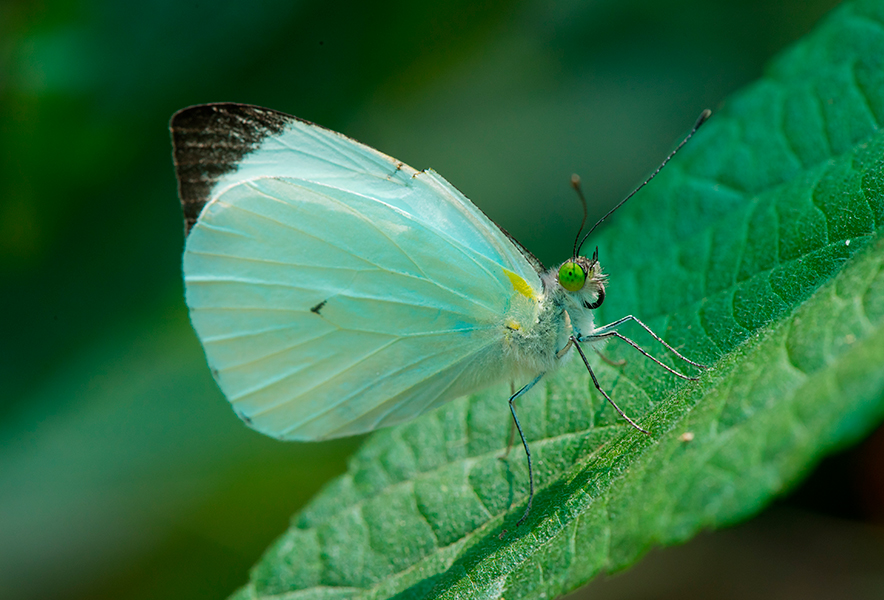 Mariposa Área de vuelo